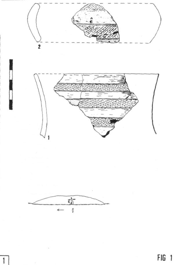 vaso-campaniforme_fig1.jpg