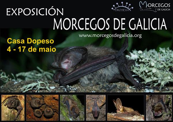 Cartel_Morcegos-de-Galicia_As-Pontes.jpg