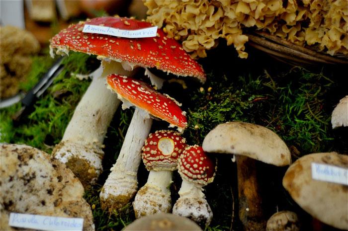 fungos